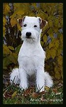 Posey Canyon Parson Russell Terrier 5