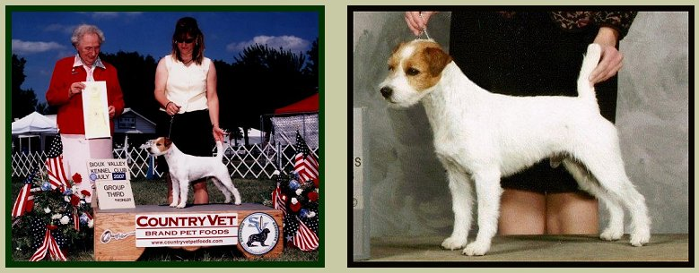 Parson Russell Terrier Posey Canyon Stuart 2
